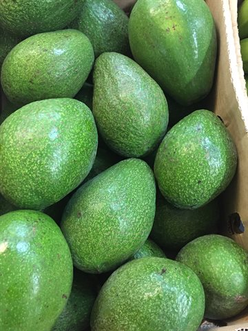 Fresh Avocado from Uganda 2 kg. Call first - Ring før